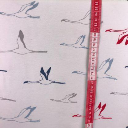 Bild Flamingos